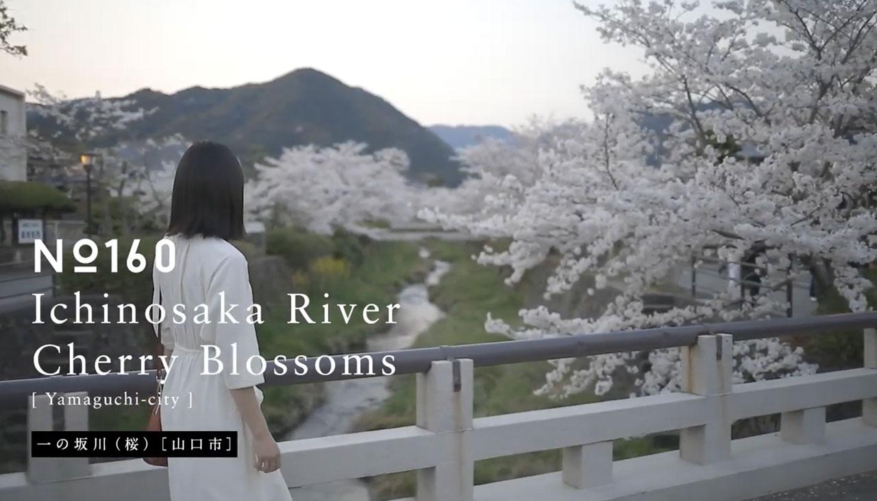 画像:一の坂川(桜)
